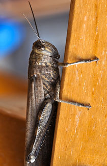 Grasshopper von emanuele molinari