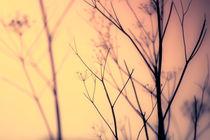 Stillness in the Sunlight by Vicki Field