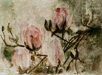 'Magnolien I' von Chris Berger