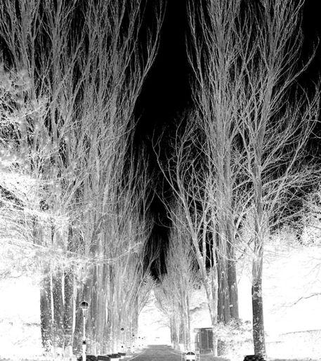 100-0798-infared-trees