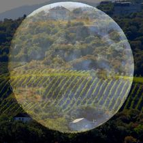 Moonshot Vineyards Crimea by Rick Todaro