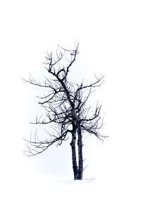 Tree Highkey no.2 by andreasrumpf