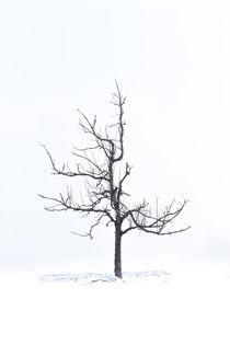 Tree Highkey no.1 by andreasrumpf