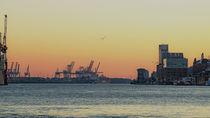 Sonnenuntergang auf der Elbe von Felix Neumann