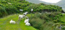 Sheepworld von gscheffbuch