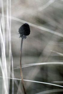 WIDOW von © Ivonne Wentzler