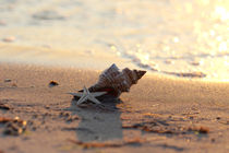 Shell on the sea / Muschel am Meer von Tanja Riedel