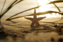 Goldener Seestern  / Starfish Still life on the beach by Tanja Riedel