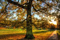 Greenwich Park London von David Pyatt