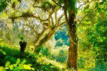 Parque Nacional Sierra de Escambray von Christian Behring