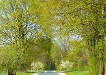 Frühlingsspaziergang von gscheffbuch