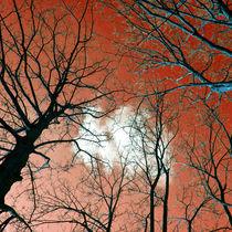 Meditative Kraft der Bäume von captainsilva
