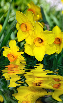 Daffodils by the Lake by Kaye Menner