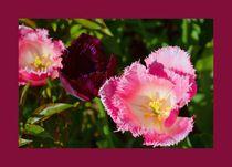 Schönheiten in pink mit Rahmen von gscheffbuch