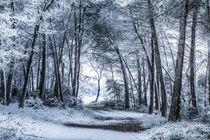 Unexpected Snowfall von Marc Garrido Clotet