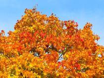 Goldener Oktober von gscheffbuch