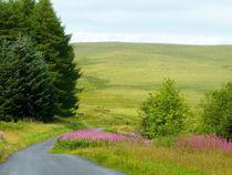 Landschaftsidylle mit Weidenröschen von gscheffbuch