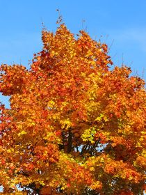 Leuchtender Herbst von gscheffbuch