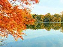 Ein goldener Herbsttag von gscheffbuch