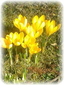 ** He Frühling **  von Rena Rady