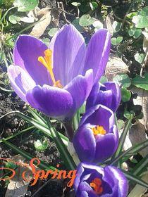 * He Frühling !!! 2 * von Rena Rady