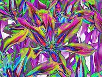 P1010270-tulpen-b-farbfolie