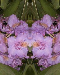 Rhododendron Variation3 von Tatjana Wicke