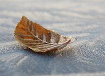 Eiskristalle auf einem Blatt by Elvira Dauwitz