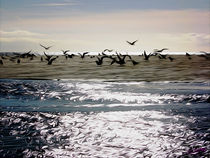 Gulls on the Beach von Carlos Segui