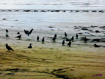 Gulls on the Beach III von Carlos Segui