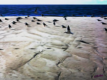 Gulls on the Beach IV von Carlos Segui