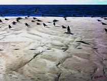 Gulls on the Beach IV von Carlos Segui