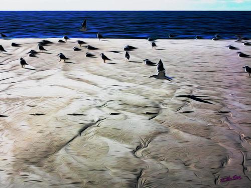 Gulls-on-the-beach-04