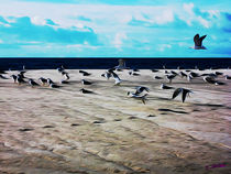 Gulls on the Beach V von Carlos Segui