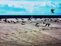 Gulls on the Beach V von Carlos Segui