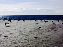 Gulls on the Beach VI von Carlos Segui