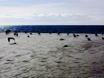 Gulls on the Beach VI von Carlos Segui