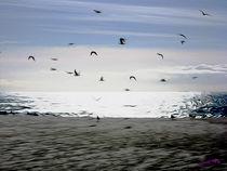 Gulls on the Beach VII by Carlos Segui