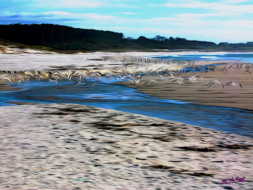 Gulls-on-the-beach-08
