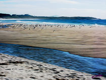 Gulls on the Beach IX by Carlos Segui