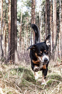 Speed mit Stöckchen by STEFARO .