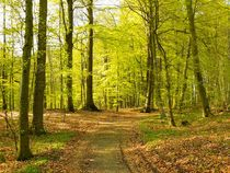 Frühlingswald von gscheffbuch