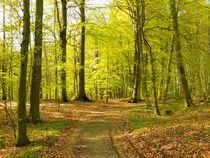Frühlingswald by gscheffbuch