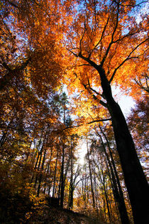 Goldener Oktober von Thomas Jäger