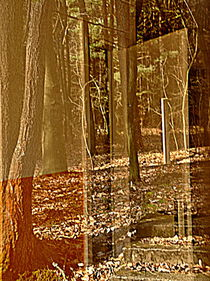 Tür in den Wald by alana