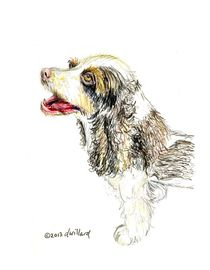 Cocoa the Cocker Spaniel by Deborah Willard