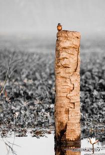 Kingfisher on a stump. von Brent Olson
