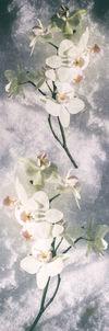 Orchideenpanorama