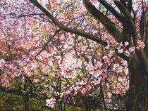 In der Frühlingswolke von Renée König