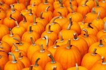 Herbstzeit von Thomas Jäger